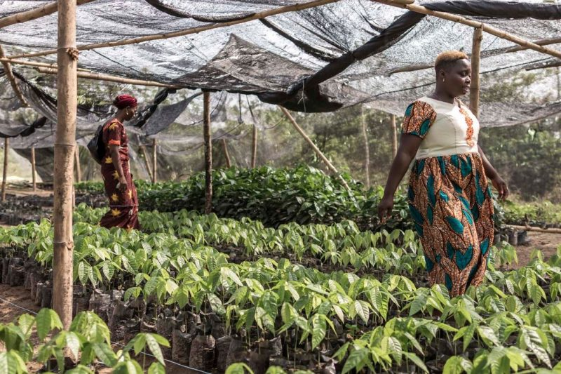 Fairtrade Fortnight under way campaigning for women cocoa farmers
