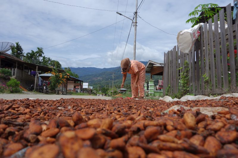 Caobisco calls for collective due diligence to support cocoa sector sustainability